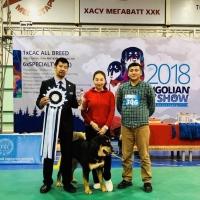 """杨威老师被邀请到蒙古国担任""""MONGOLIAN DOG SHOW FCI 2018 (2018.09.22,23)犬展的审 ..."""