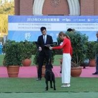 恭喜张予同学,通过CKU C级牵犬师资格认定考试!