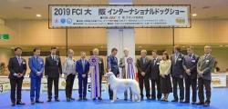 很高兴被邀请到日本JKC2019年11月大班犬展审查工作!全场犬只940只