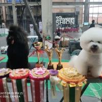 2019年CKU哈尔滨犬赛第一天威森与赛迪获得JBIS2,JBIS4,PBIS4