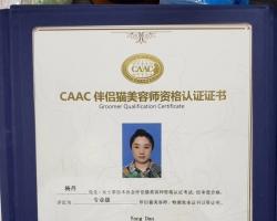 杨丹老师'获得CAAC伴侣猫亚博体育下载链接,专业级亚博体育下载链接!
