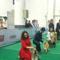 恭喜冰冰同学通过CKU牵犬师C级技术鉴定!