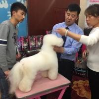 杨威老师,2016年CKU公开课[天津]比熊讲座!