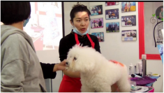狗狗的五彩世界--狗狗创意染色--主讲爱尚宠物-关雪老师
