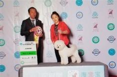 1岁雅谷在亚洲杯休息半年之后首次比赛,2018年廊坊CKU犬展获得了青年全场总冠军BIS 3
