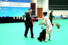 满洲里cku全犬种冠军展,今天迷你贵宾朱蒂比熊卡丁两个大宝贝,表现非常出色,明天...