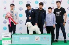 2018年CKU哈尔滨首日犬赛,比熊雅谷获得青年全场总冠军JBIS2.JBIS3.BIG1!秋田查吧...