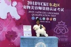 大连2018年CKU宠物bwin官网资格认定考试!小颖同学比熊A级!