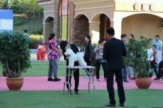 恭喜刘楠同学,通过CKU C级牵犬师资格认定考试