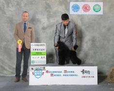 迷你贵宾朱迪8个月首次比赛!2014年杭州犬展获得犬种冠军BOB!