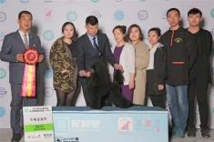 2017年4月哈尔滨CKU犬赛!迷你贵宾朱迪获得全场总冠军BIS3,比熊雅谷获得组别冠军B...