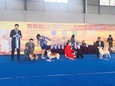 爱尚杨威老师在2019年3月CKU广东江门全犬种审查工作!