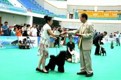 满洲里cku全犬种冠军展,表现出色