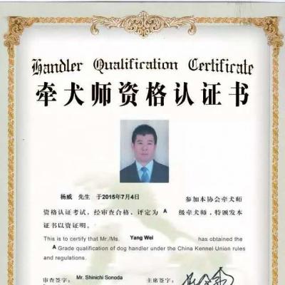 杨威老师通过CKU A级牵犬师!黑龙江首位CKU A级牵犬师!