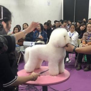 关雪老师,2018年CKU沈阳比熊公开课!