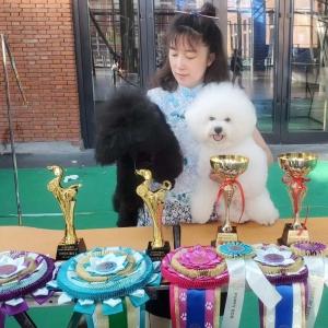 哈尔滨CKU犬赛第二天威森与赛迪获得成犬全场总冠军BIS2幼犬全场总冠军PBIS2,PBIS4