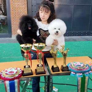 第三天CKU2019年哈尔滨犬展,比熊威森获得2场青年全场总冠军第一名JBIS1,迷你贵宾赛迪 ...